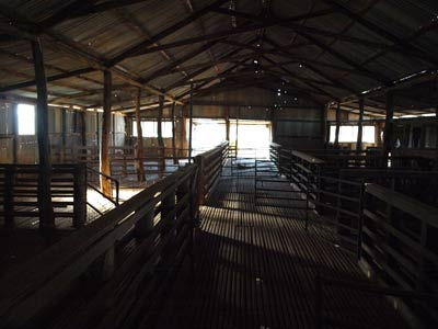 Mt Wood Shearing Shed